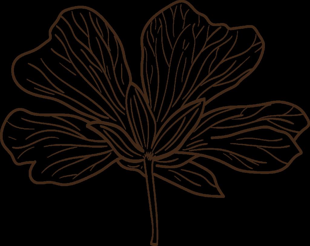 naturkosmetik-blatt-pflanze